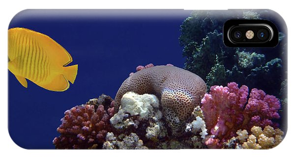 Colorful Coralreef IPhone Case