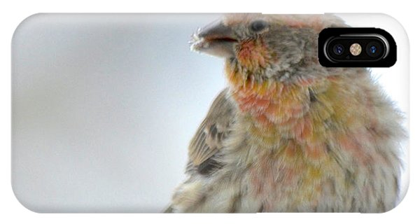 Colorful Finch Eating Breakfast IPhone Case