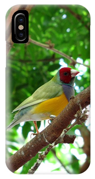 Colorful Finch Phone Case by George Jones