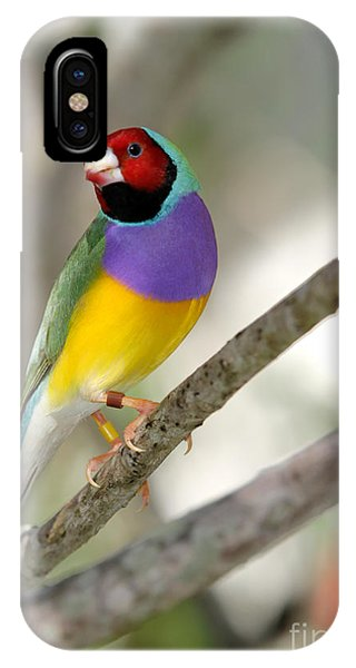 Colorful Gouldian Finch IPhone Case