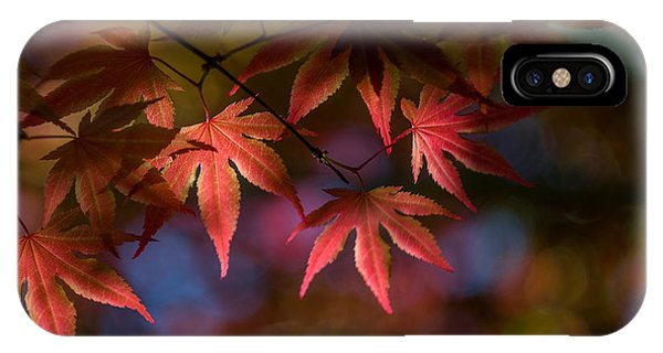 Colorful Japanese Maple IPhone Case