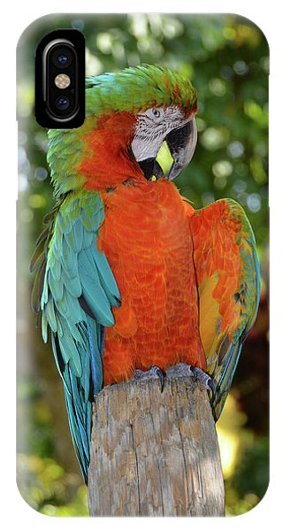 Colorful Macaw With Wings Spread IPhone Case