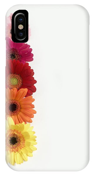Colorful Row Of Gerbera Daisies IPhone Case
