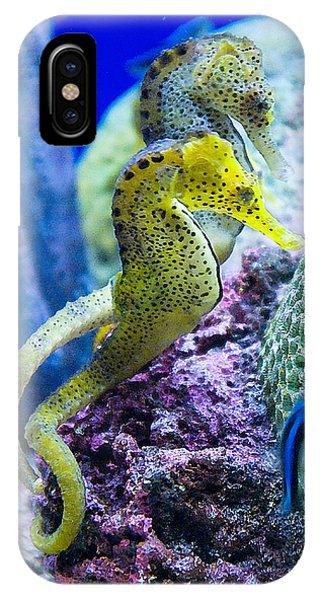 Colorful Seahorses IPhone Case