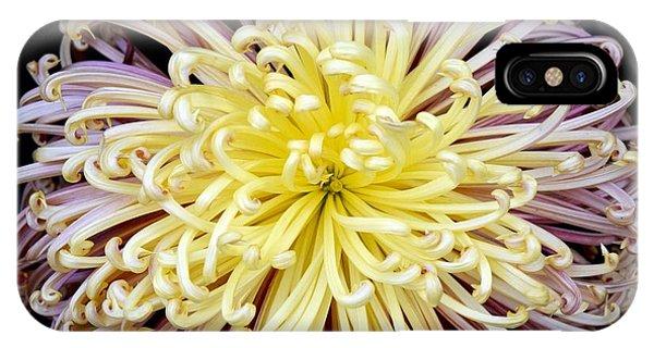 Colorful Spider Chrysanthemum   IPhone Case