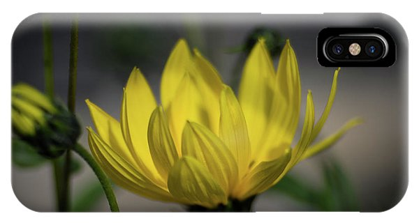 Colour Of Sun IPhone Case