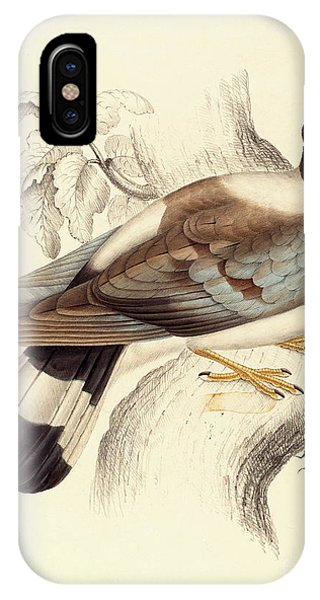 Columba Leuconota, Snow Pigeon IPhone Case