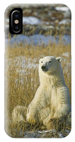 Comfortable Polar Bear IPhone Case