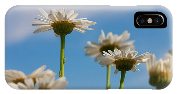 Coming Up Daisies IPhone Case