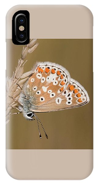 Common Blue Roosting IPhone Case