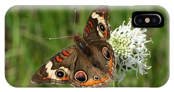 Common Buckeye Butterfly On Wildflower IPhone Case