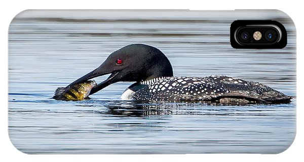 Common Loon Square IPhone Case