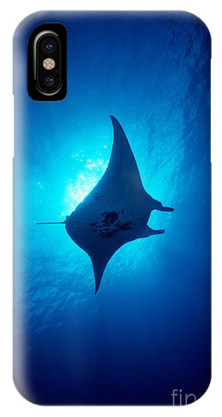 Common Manta Ray IPhone Case