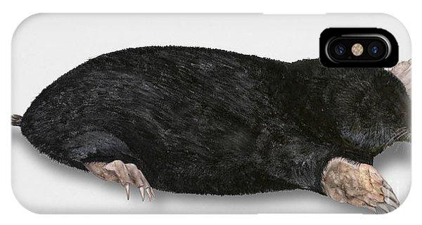 Common Mole Talpa Europaea IPhone Case