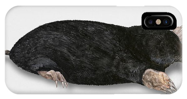 Common Mole Talpa Europaea IPhone Case