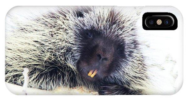 Common Porcupine IPhone Case