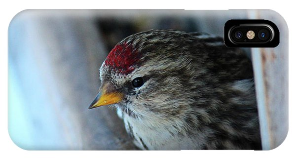 Common Redpoll IPhone Case