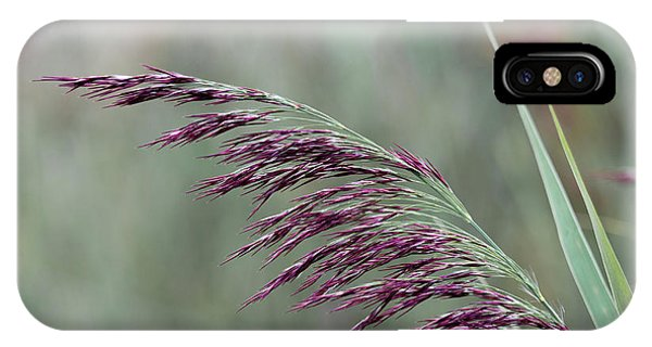 IPhone Case featuring the photograph Common Reed Flower Stalk by Scott Lyons
