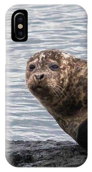 Common Seal Portrait IPhone Case