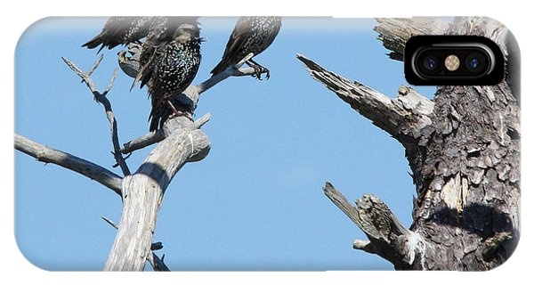 Common Starling IPhone Case