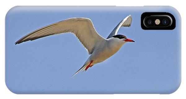 Common Tern IPhone Case