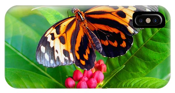 Common Tiger Glassywing Butterfly IPhone Case
