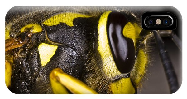 Common Wasp Vespula Vulgaris Close-up IPhone Case