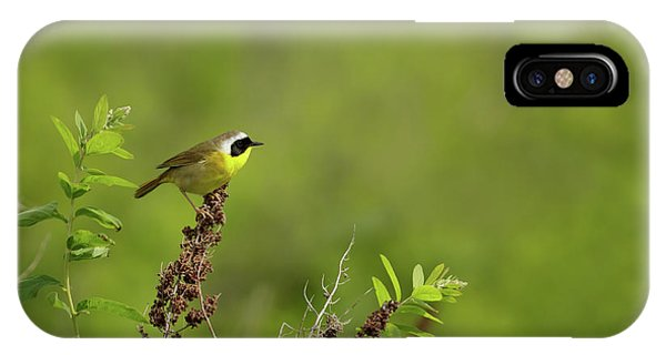 Common Yellowthroat IPhone Case