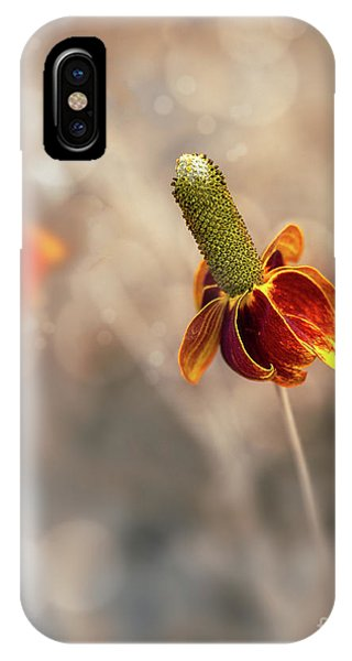 Mexican Hat Prairie Flower IPhone Case
