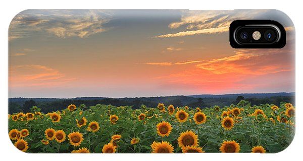 Sunrise iPhone Case - Connecticut Sunflowers In The Evening by Bill Wakeley