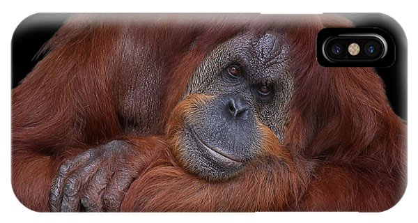 Contented Orangutan IPhone Case