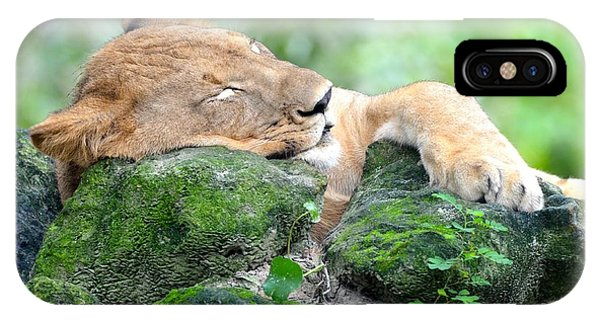Contented Sleeping Lion IPhone Case