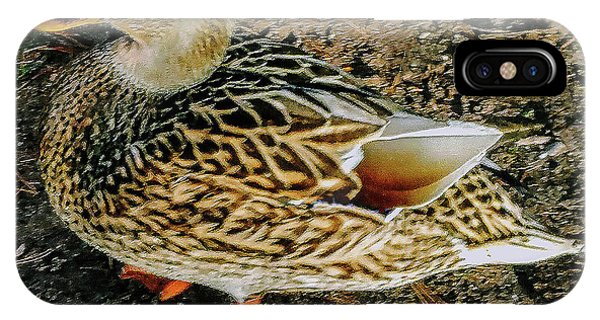 IPhone Case featuring the photograph Cool Duck by Roger Bester