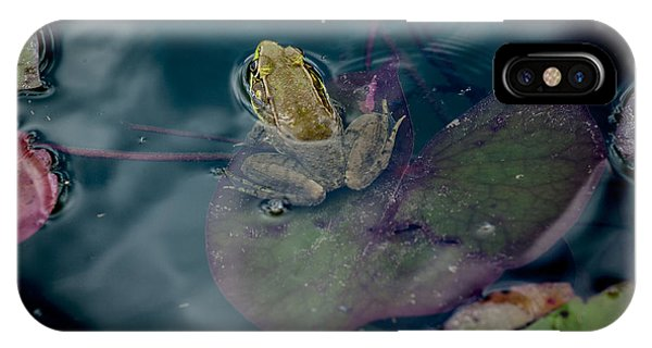 Cool Frog-hot Day IPhone Case