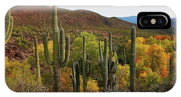 Coon Creek With Saguaros And Cottonwood, Ash, Sycamore Trees With Fall Colors IPhone Case