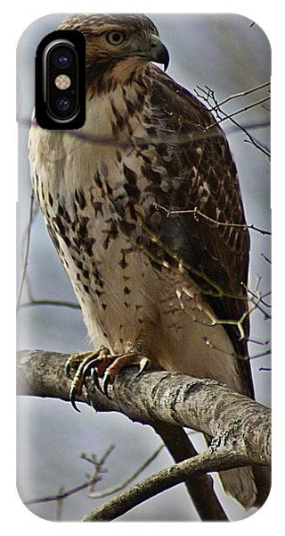 Cooper's Hawk 2 IPhone Case
