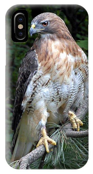 Coopers Hawk IPhone Case