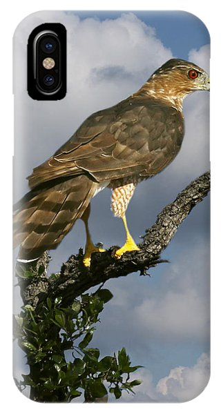 Cooper's Hawk On Watch IPhone Case