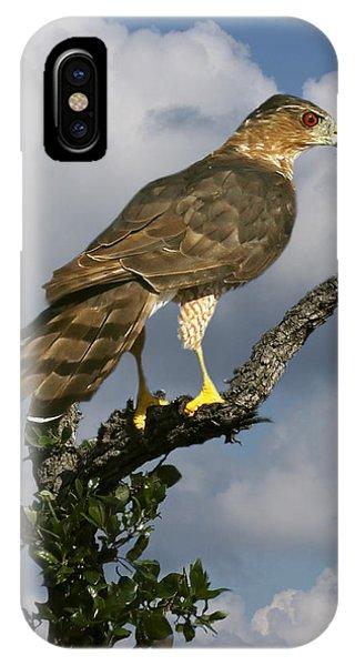 Cooper's Hawk On Watch IPhone Case