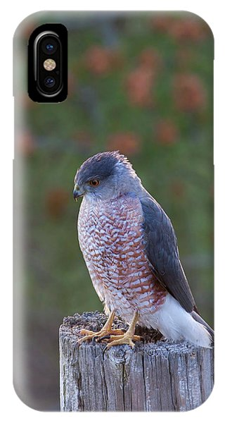 Coopers Hawk Perched IPhone Case