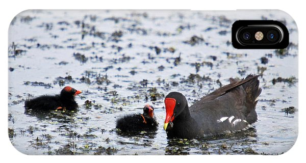 Coot Family Phone Case by Teresa Blanton