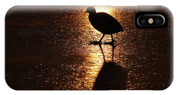 Coot Walks On Golden Ice  IPhone Case