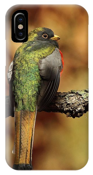 A Coppery-tailed Elegant Trogon IPhone Case