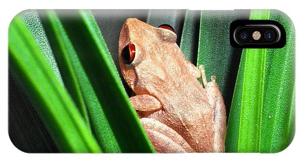 Coqui In Bromeliad IPhone Case