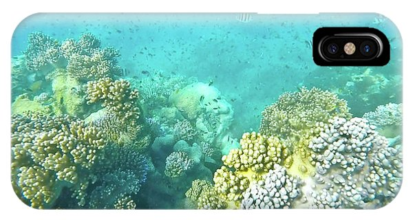 IPhone Case featuring the photograph Coral by Debbie Cundy