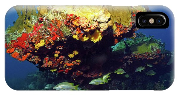 Coral Reef Scene, Calf Rock, Virgin Islands IPhone Case