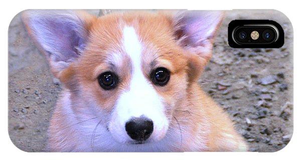 Corgi Puppy IPhone Case