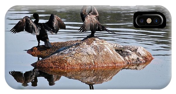 Cormorant Duo Reflections  IPhone Case