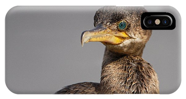 Cormorant Portrait IPhone Case