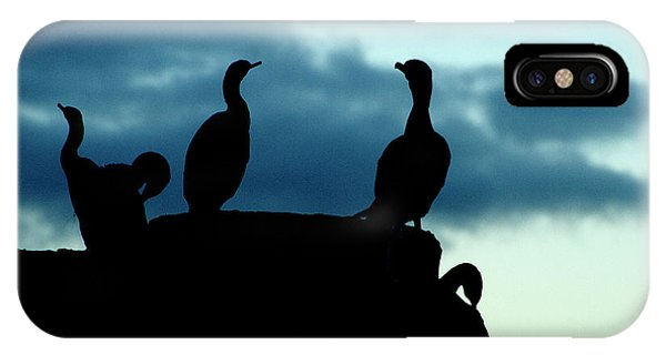 Cormorants In Silhouette IPhone Case